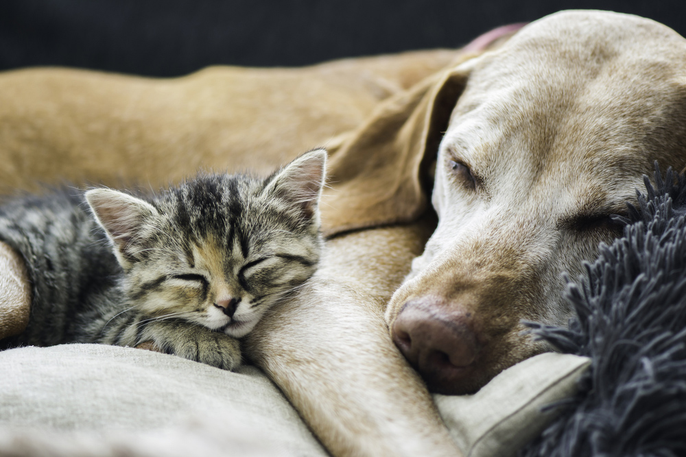 Puppy and kitty cuddles, heartworm free.
