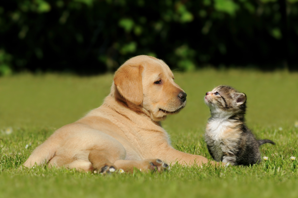 puppy and kitten on grass